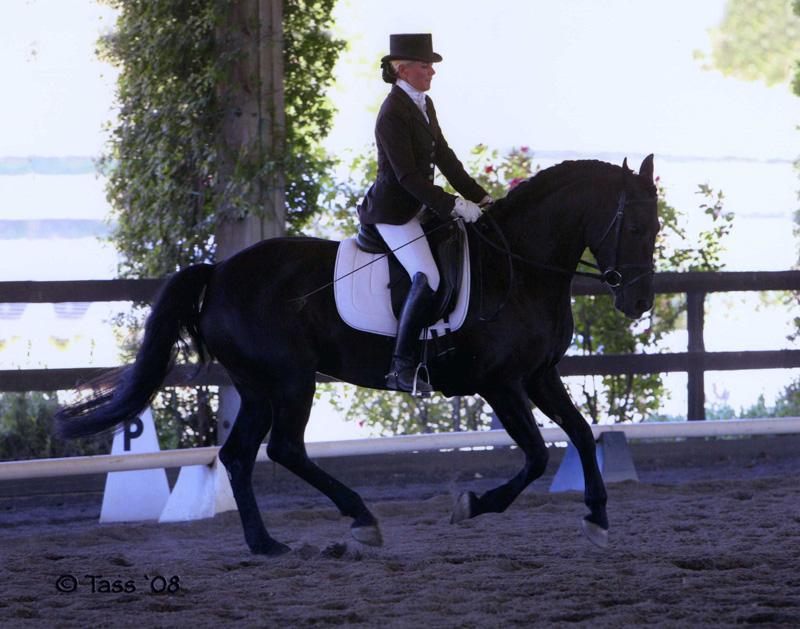 2008_sport_horse_scarlet1