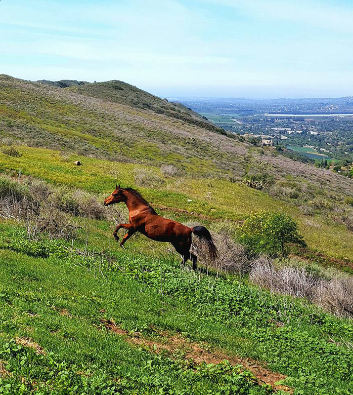 meagan_shaffer_horse_running_up_hill