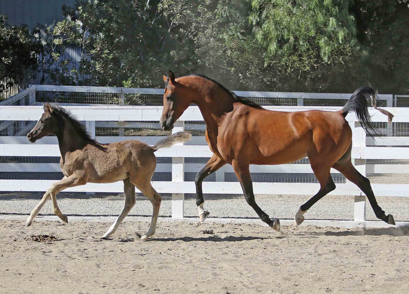 2018reg2_mare_and_foal