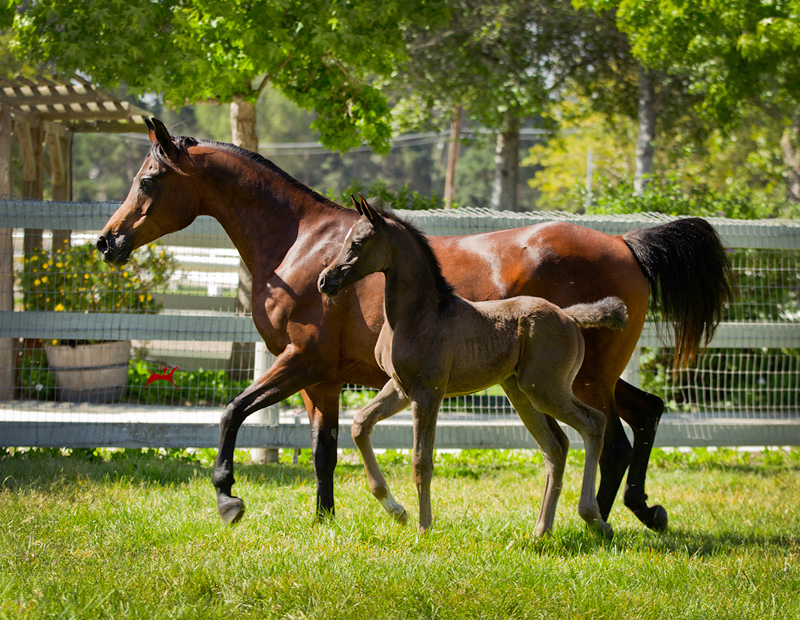 Satine ia and 2017 foal