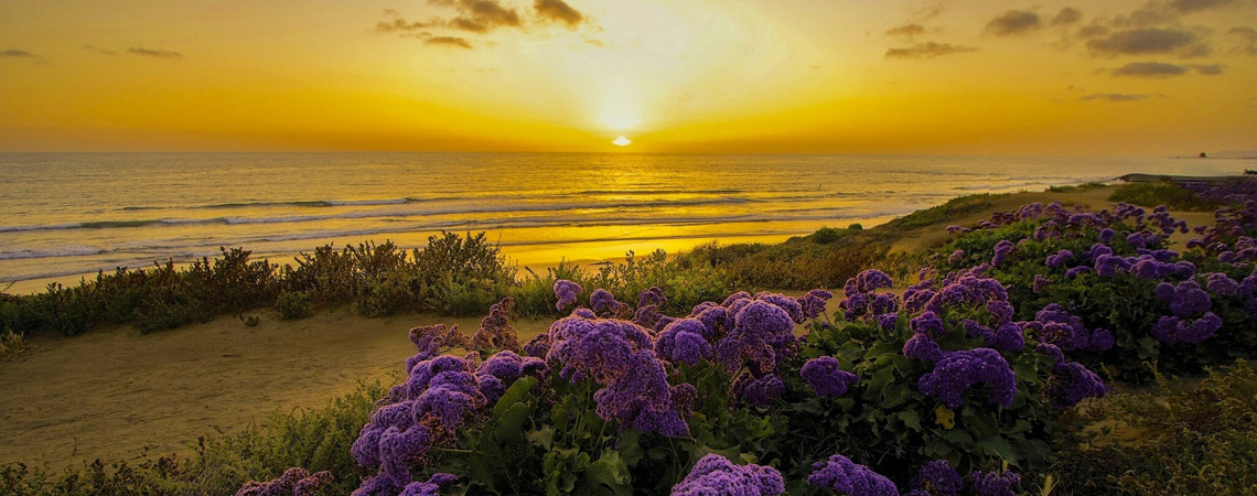 a_pacific_ocean_california_sunset_beach_flowers